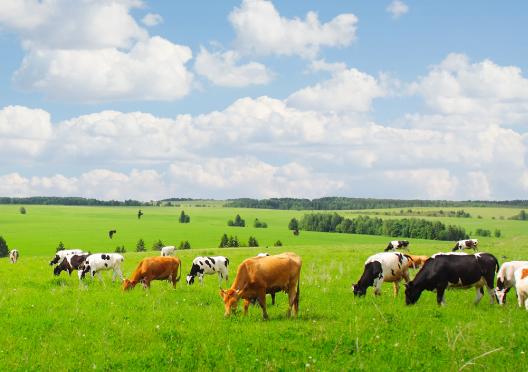 Реєстрація кормових добавок, зареєстрованих в ЄС: оптимальна модель для України